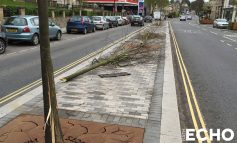Information sought after trees destroyed on the London Road in Bath