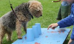 Rescue pooches to put best paws forward at Bath Cats and Dogs Home Fun Day