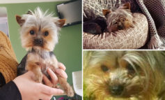 Search continues for missing Yorkshire Terrier after escape from Weston home