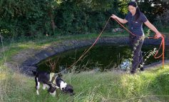 Four-legged detective to help Wessex Water sniff out protected species