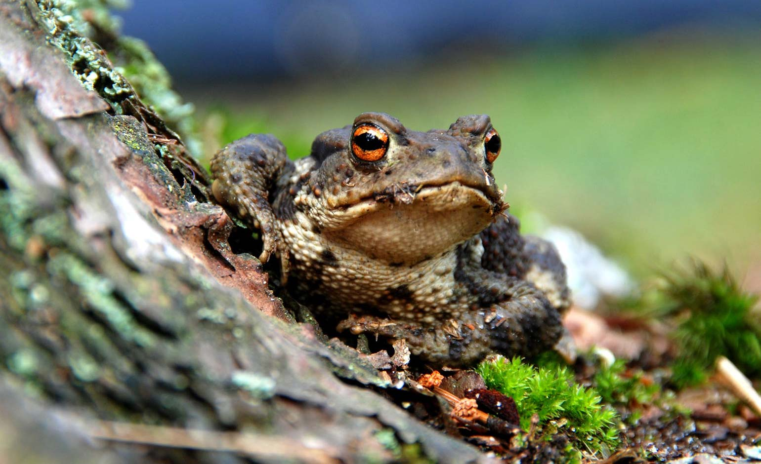 Wildlife conservation charity Froglife set to host Toad Summit in Bath