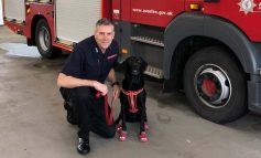 Avon Fire & Rescue Service welcomes four-legged fire investigation recruit