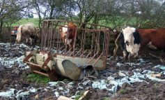 81-year-old farmer given suspended sentence over animal welfare charges