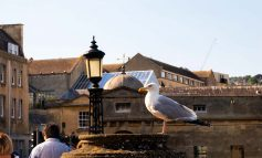 Those affected by urban gulls being encouraged to share their experiences