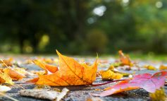 Extra money for autumn leaves clean-up across Bath & North East Somerset