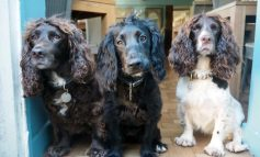 Combe Hay's The Wheatsheaf named as the region's Most Dog-Friendly Pub