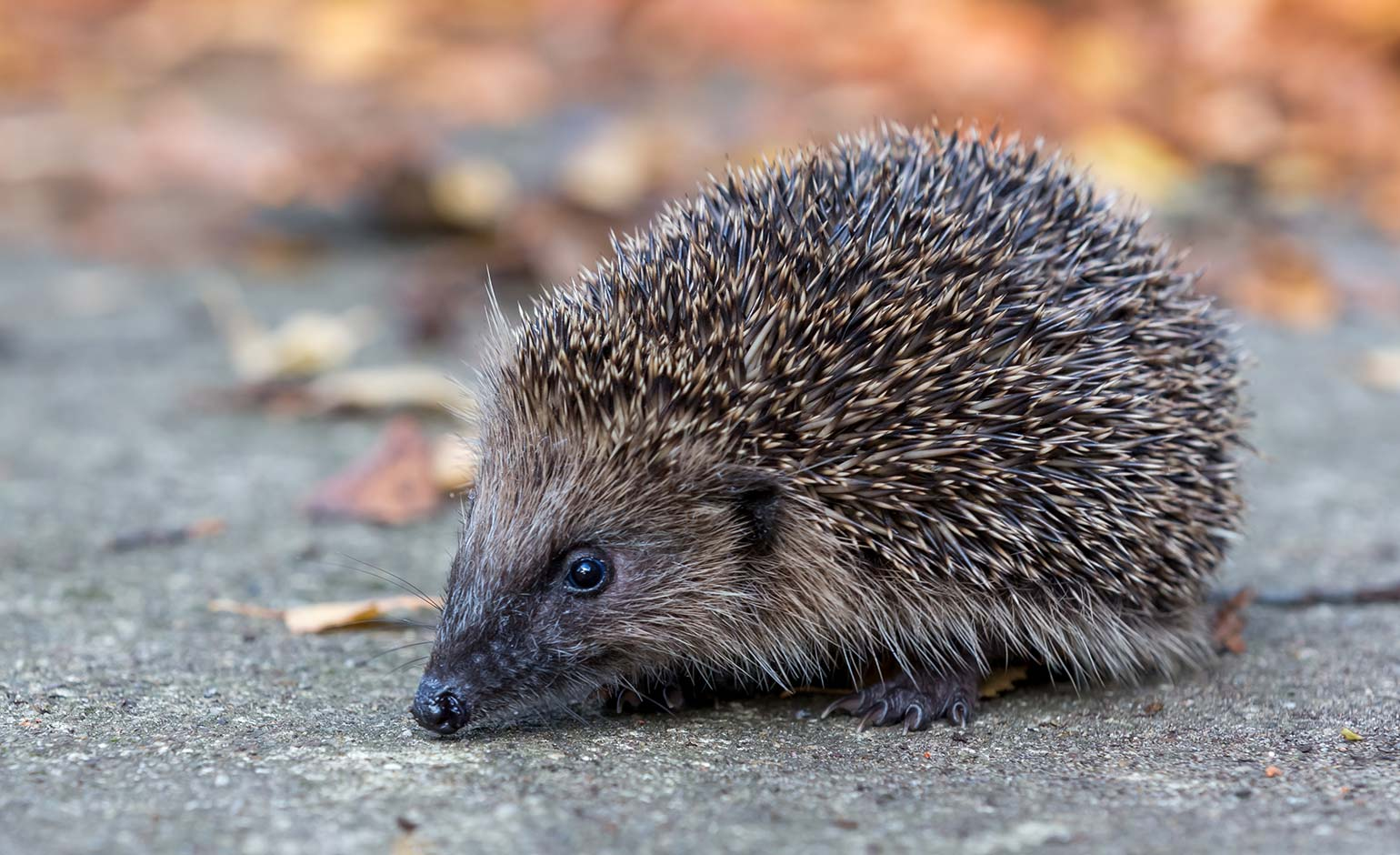 Hedgehog highway constructed at local development to encourage wildlife