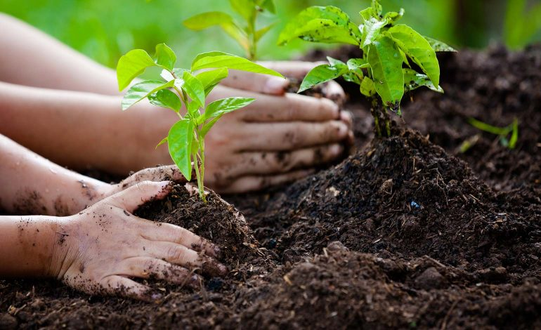 Bath residents invited to help plant hundreds of new trees in Rush Hill