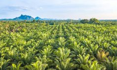 Bath engineers call for palm oil production to be made more sustainable