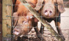 Bath City Farm set to broadcast live animal feeding via their Facebook page