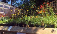 Garden centre scheme to help disadvantaged adults preparing to open
