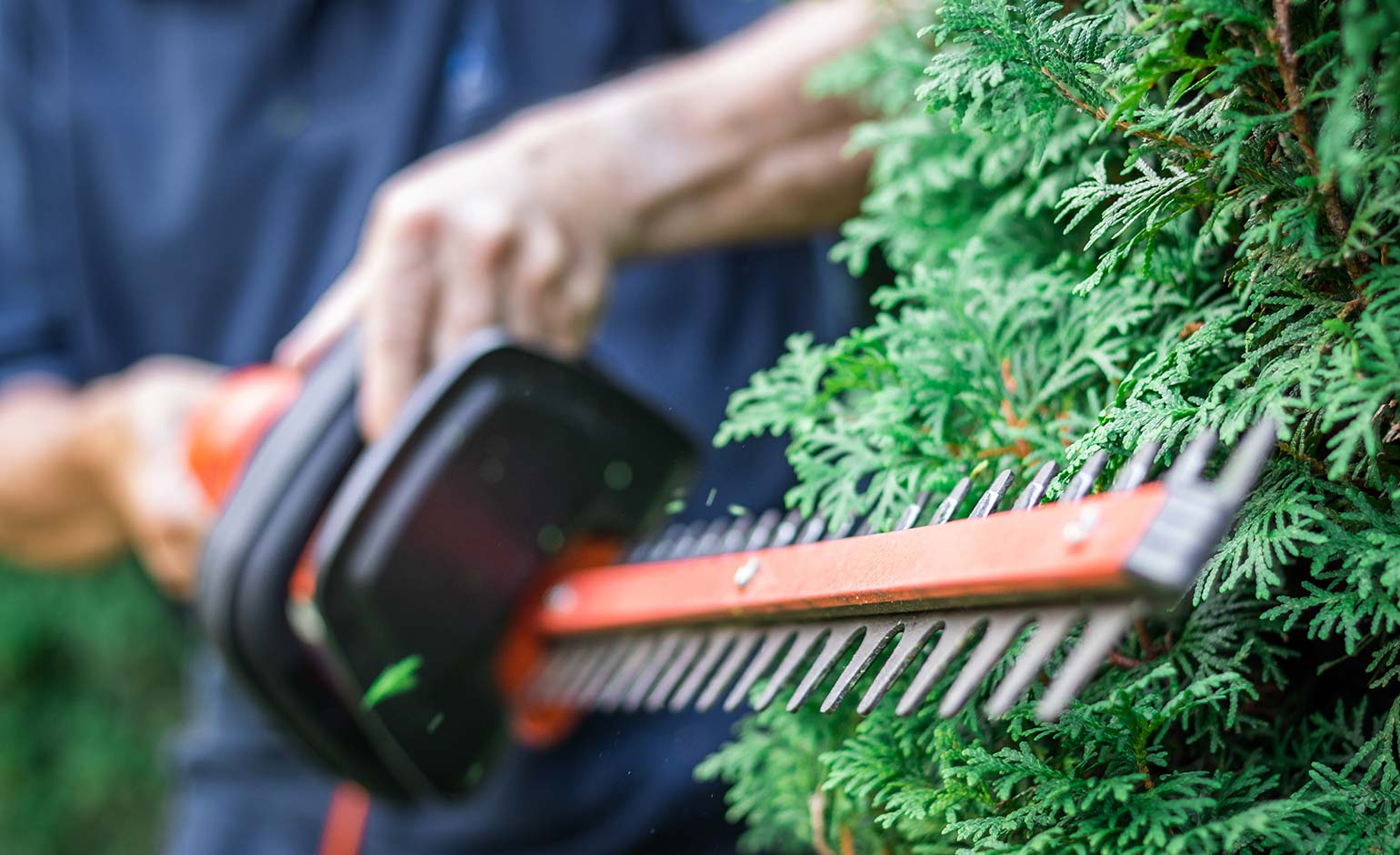Council asks residents to keep hedges trimmed to help social distancing