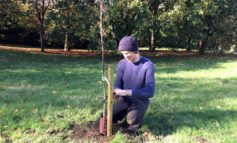 Residents invited to donate trees as part of efforts to protect environment