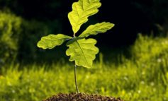 Jewish refugees to be honoured with special tree planting commemoration